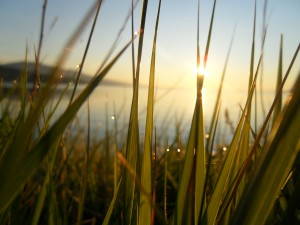baikal-dawn-dew-grass-happiness-sunshine-rays-lake-fresh-greens-warm