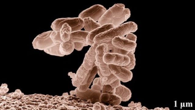 Antimicrobico-resistenza, Antibiotico-resistenza e l'Era Post-Antibiotica
