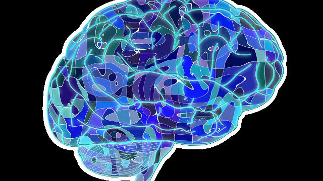 La pulizia del cervello: il sistema linfatico del cervello e altre scoperte recenti