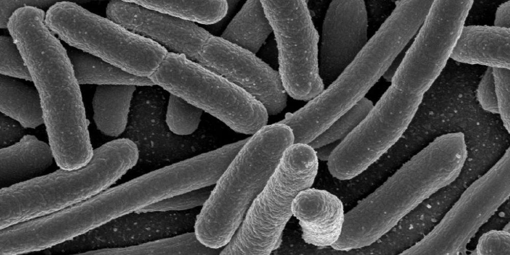 Il Microbiota umano: un coinquilino indispensabile