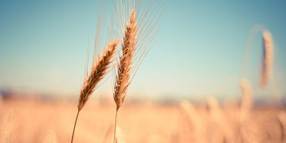 Sensibilità al glutine non-celiaca: di cosa si tratta?