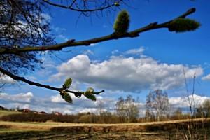 spring-110722_1280